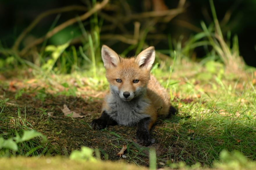 Скачать прикольные фото красивой лисы