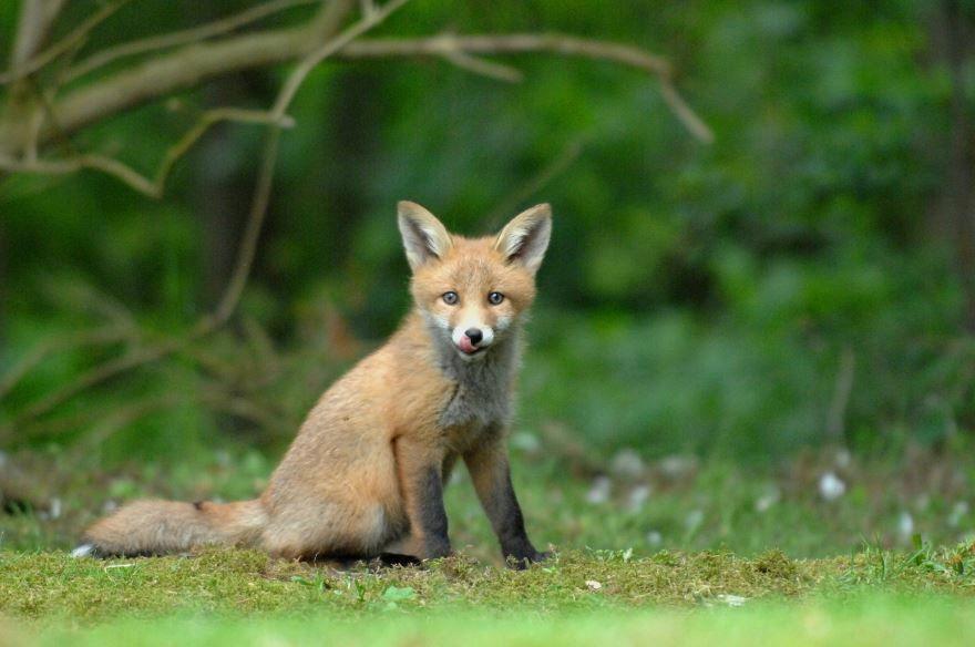Скачать фото лисы как в мультиках для детей
