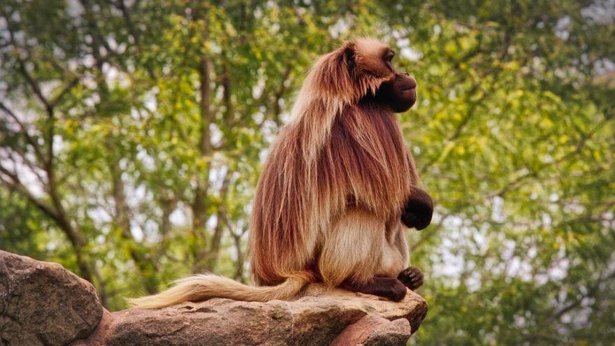 Фотографии бабуина в хорошем качестве