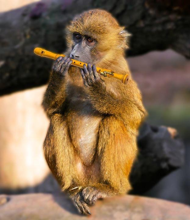 Скачать лучшие фото бабуина бесплатно
