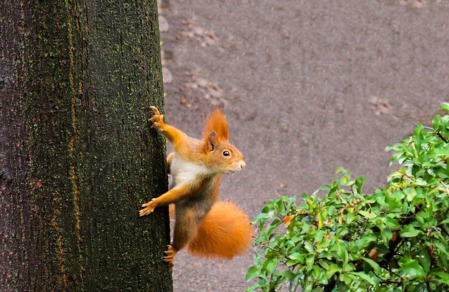 Фото маленького животного - белки