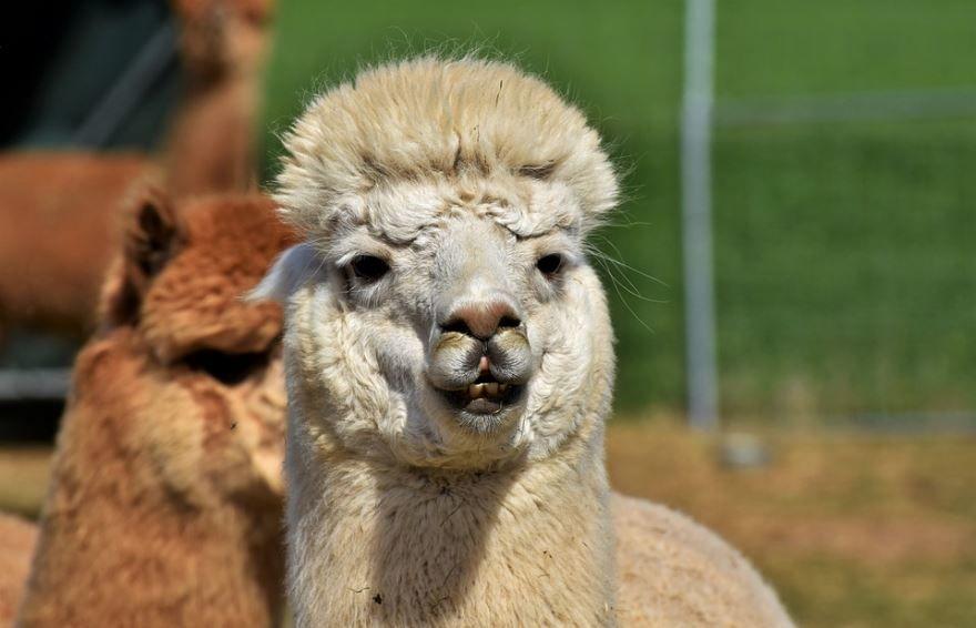 Бесплатные фото восточного животного - верблюда