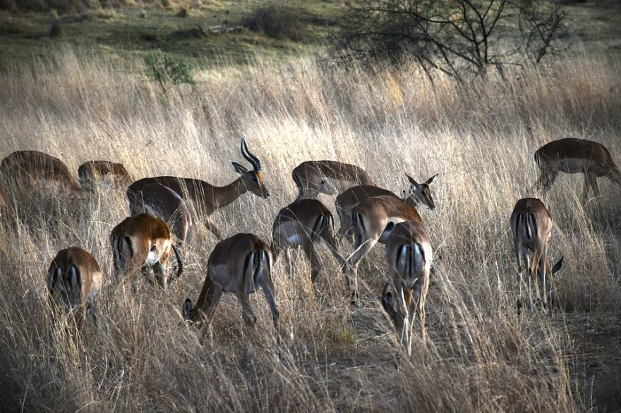 Новая фотография газели, скачать фото животного газель