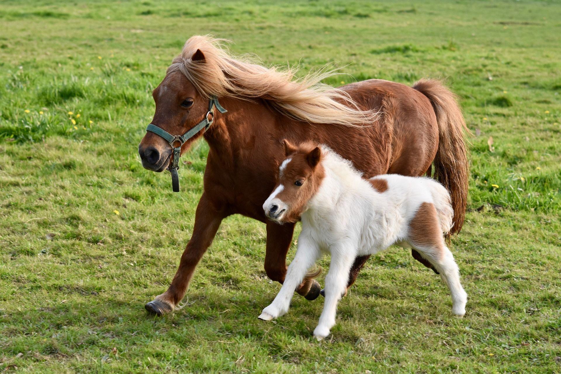 Смотреть лучшие фото пони