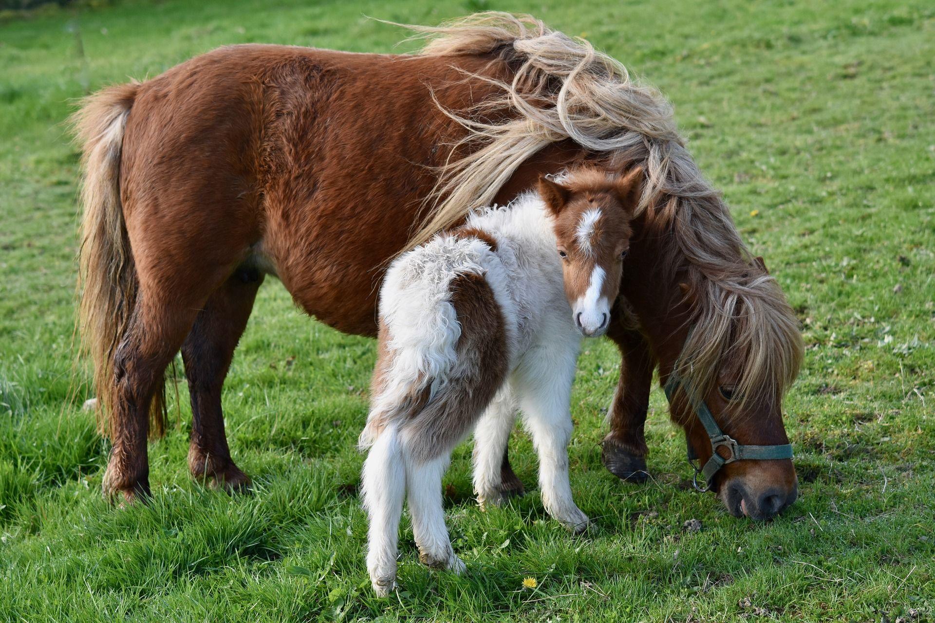 Смотреть картинки новые пони
