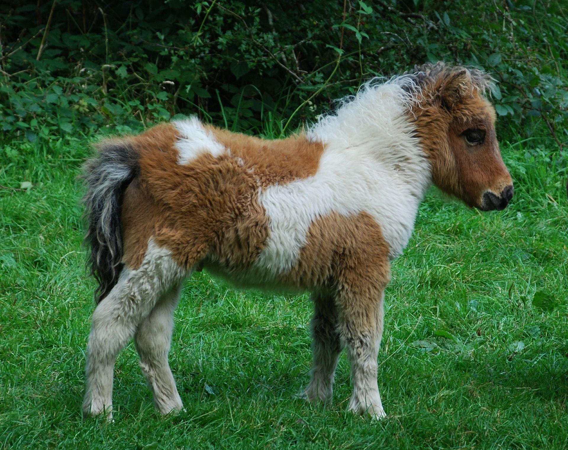 Смотреть картинки мой маленький пони