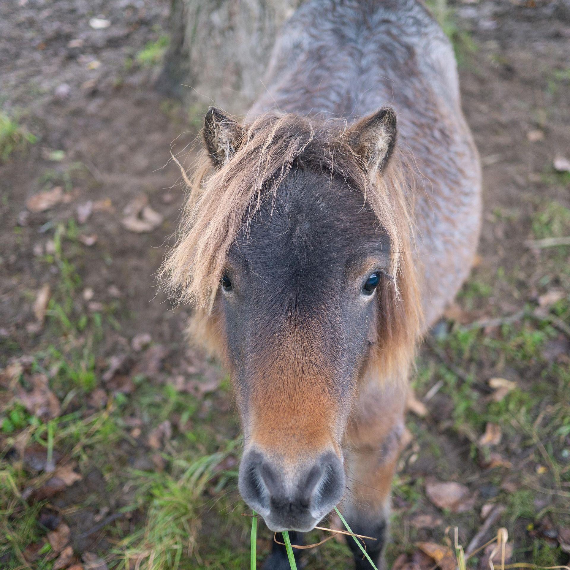 Пони с новой прической