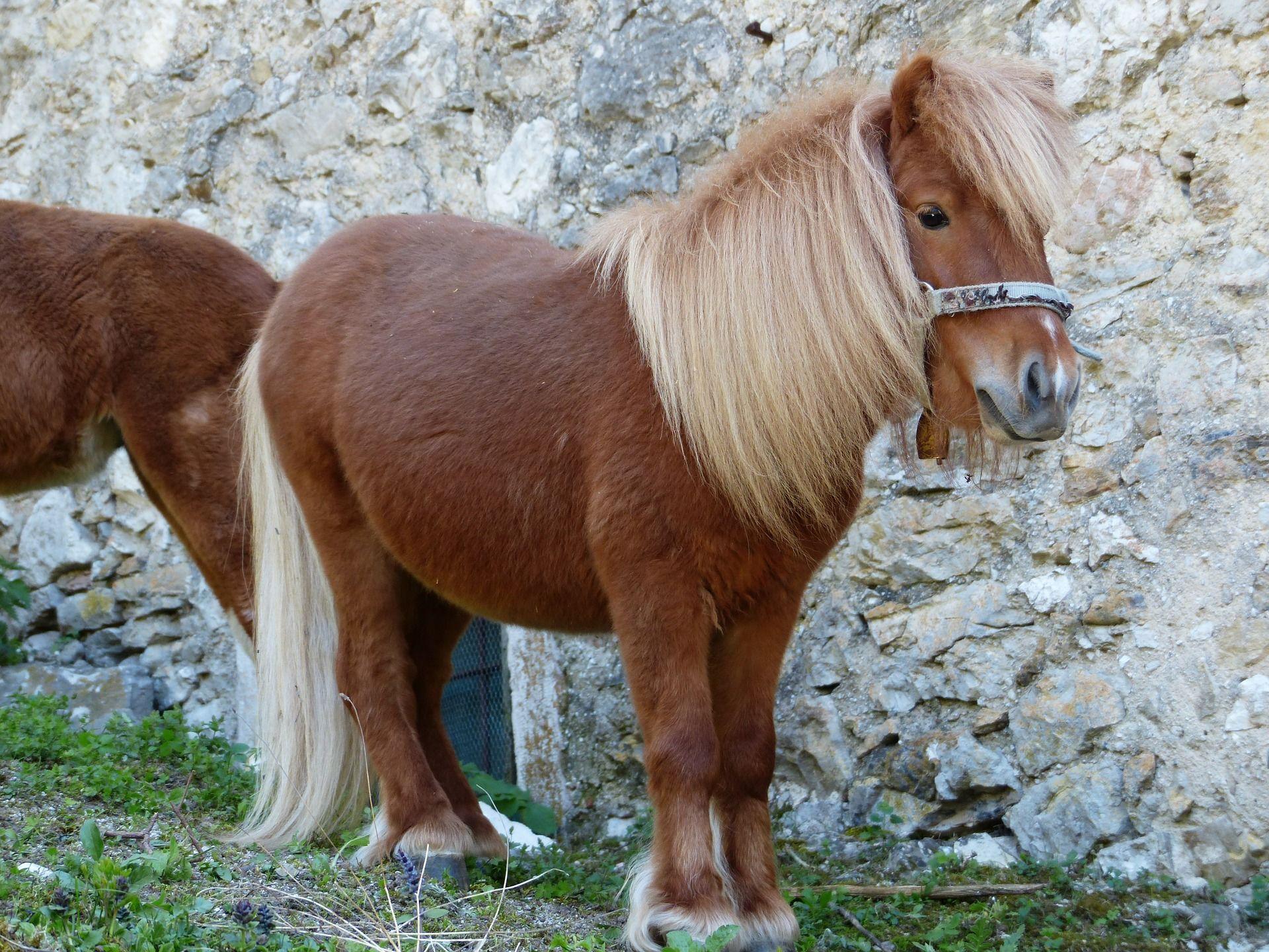 Смотреть красивые фото пони