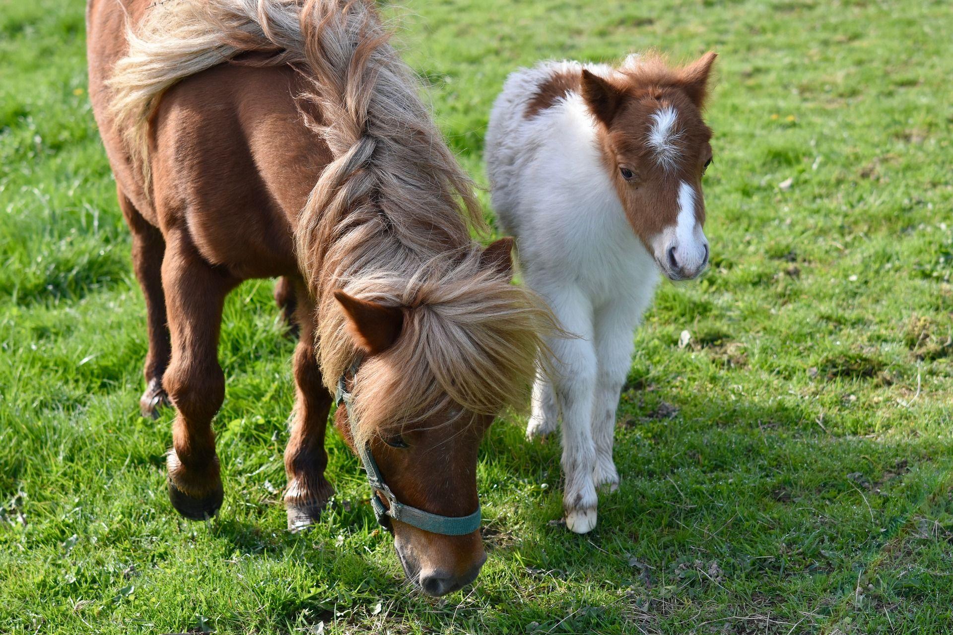 Скачать бесплатно красивые фото пони