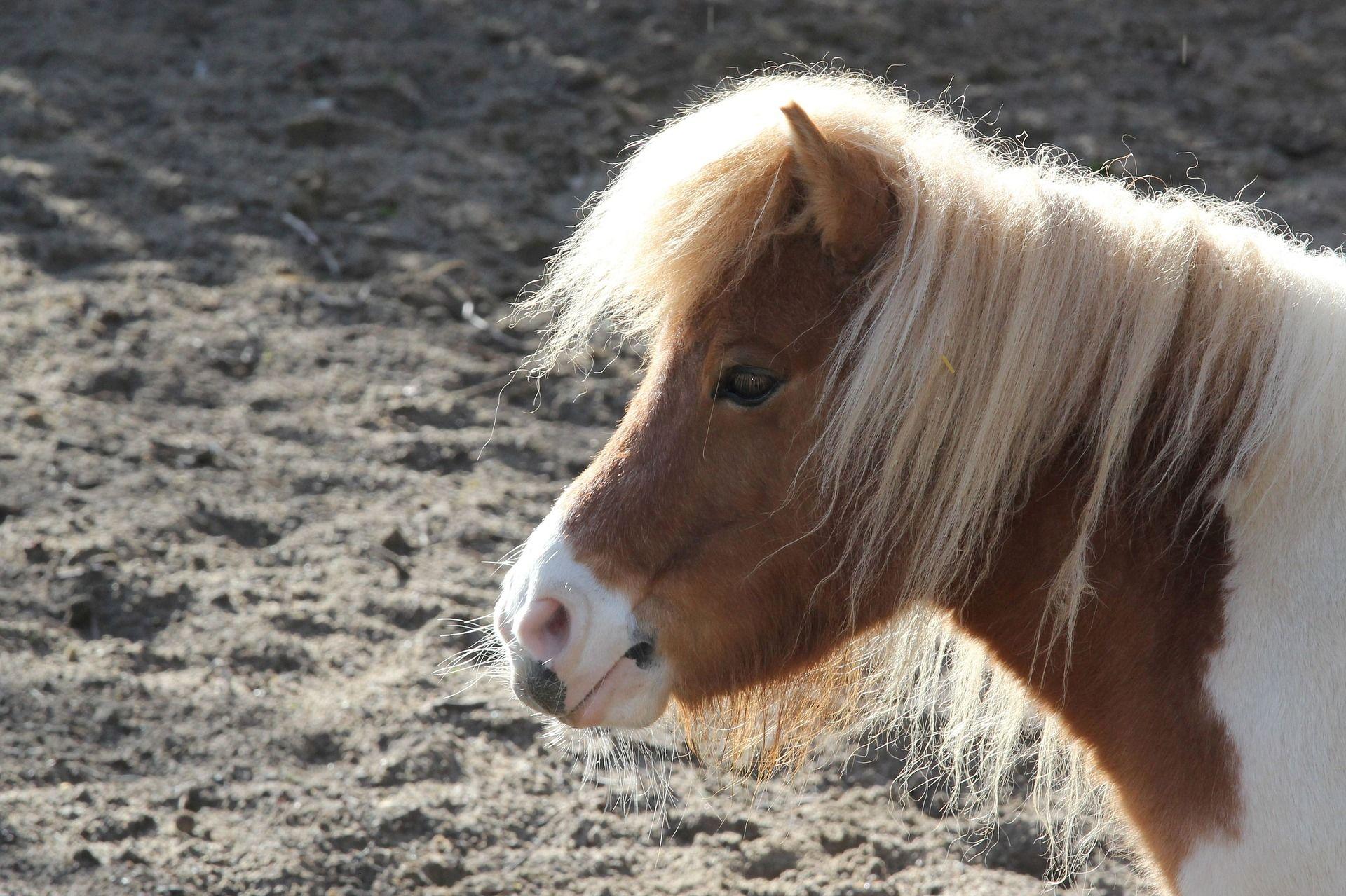 Красивый пони с красивой челкой