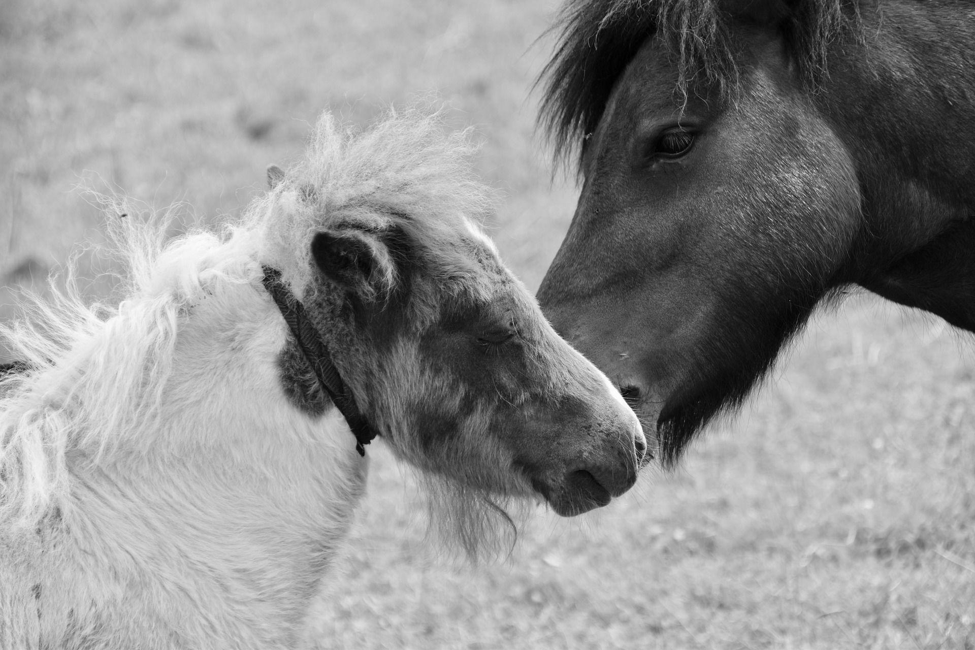 Скачать бесплатно красивые картинки пони