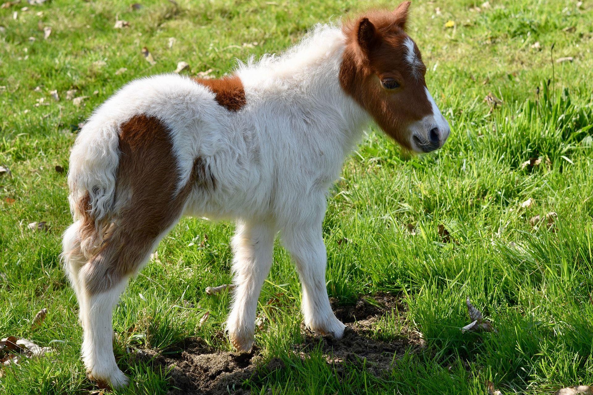 Скачать красивые картинки белой пони