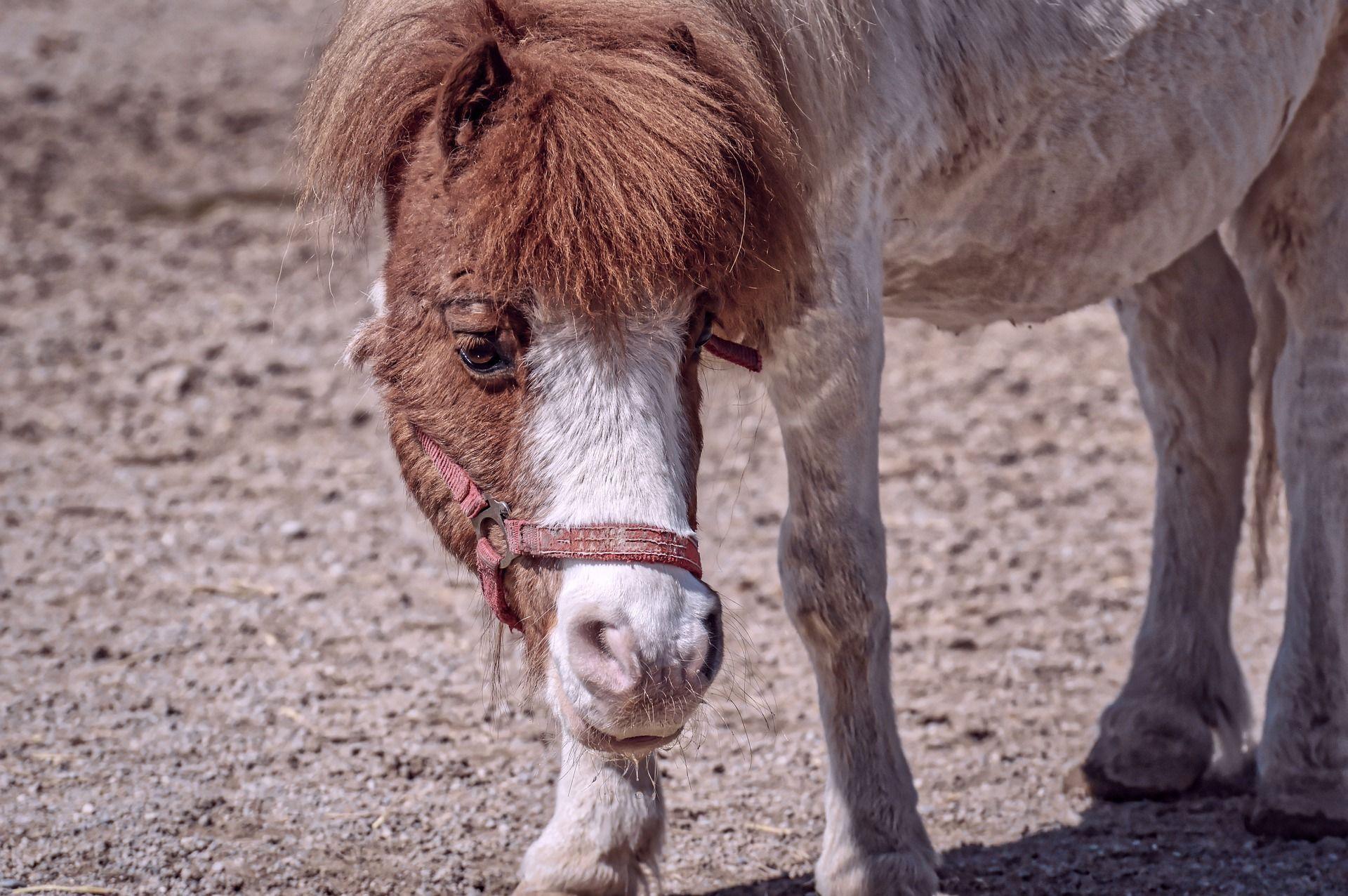 Смотреть красивые картинки пони