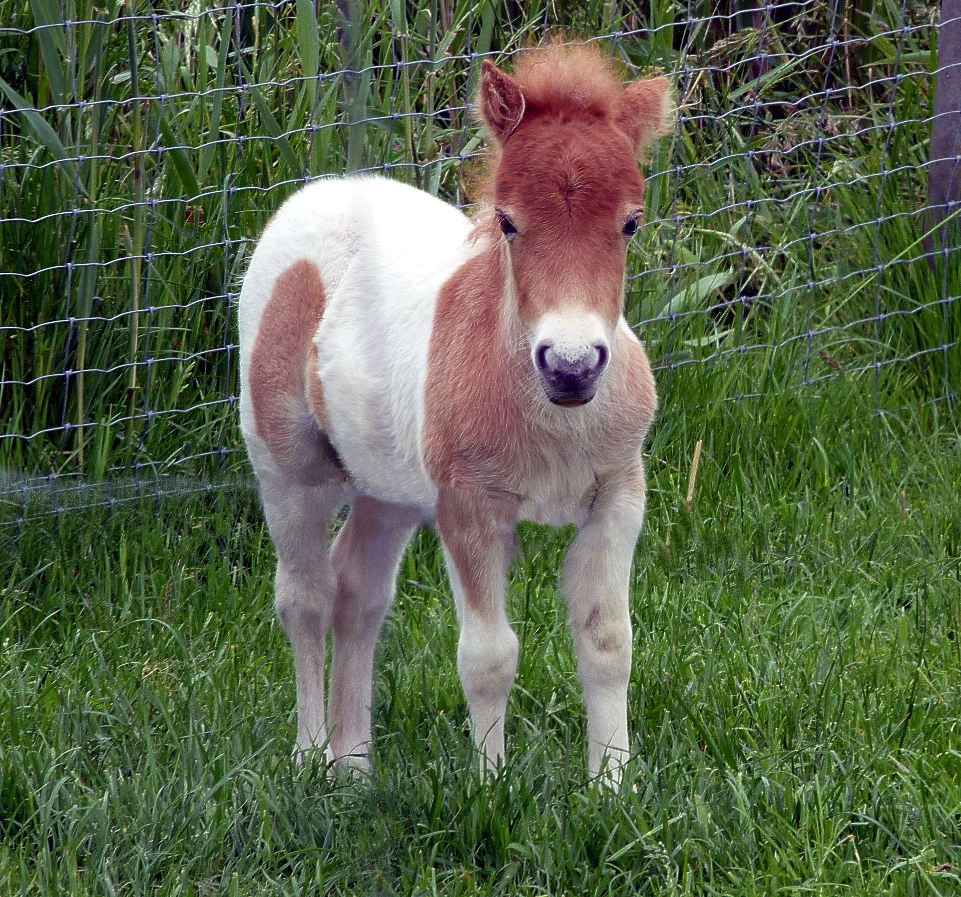 Смотреть картинки милая пони