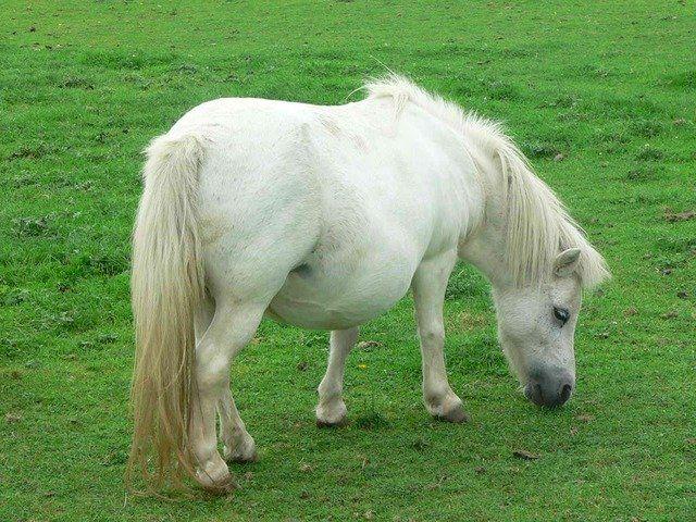 Скачать красивые картинки пони