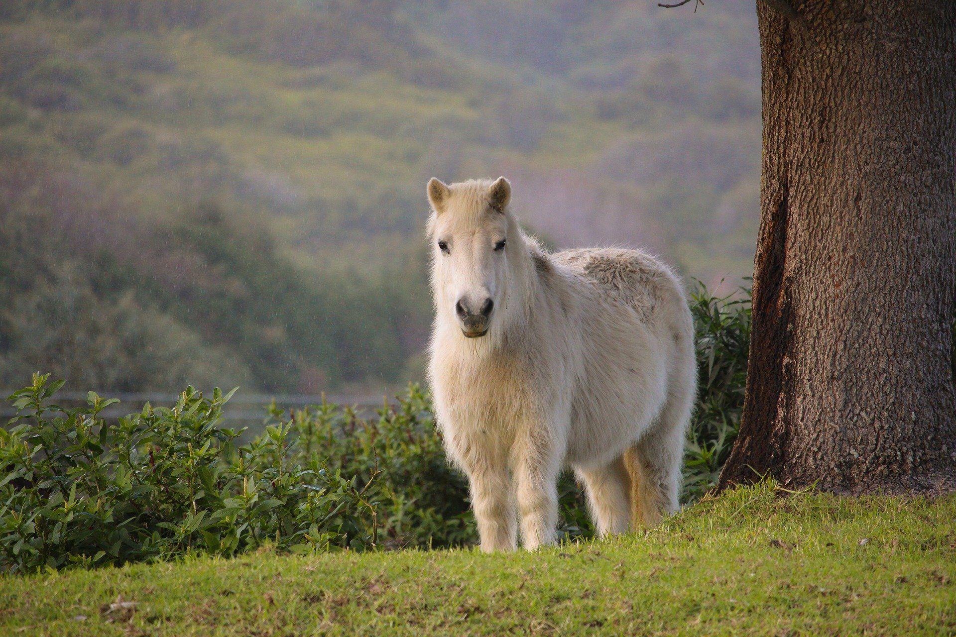 Смотреть красивые картинки про пони