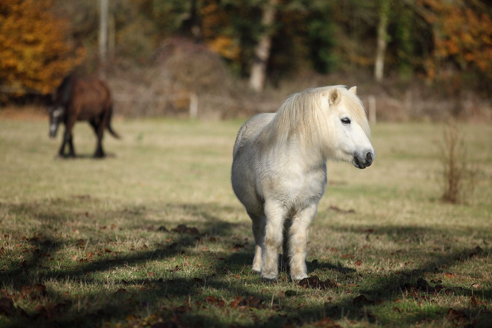 Скачать бесплатно картинки новых пони