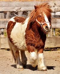 Красивая картинка милая пони