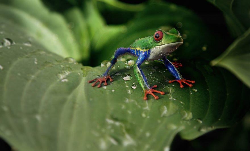 Смотреть фото красивой лягушки бесплатно