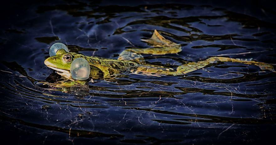 Смотреть лучшие картинки лягушек бесплатно