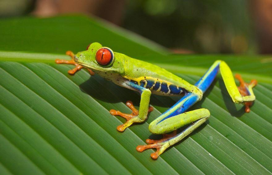 Скачать картинки лягушек для детей