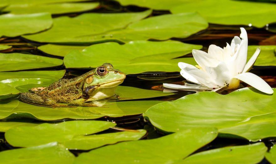 Смотреть бесплатно красивые картинки лягушек