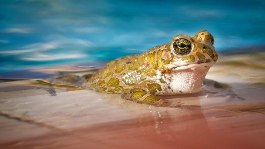 Смотреть лучшие фото лягушек бесплатно