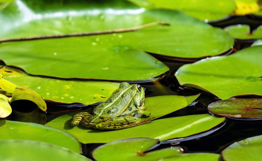 Смотреть бесплатно фотографии лягушек