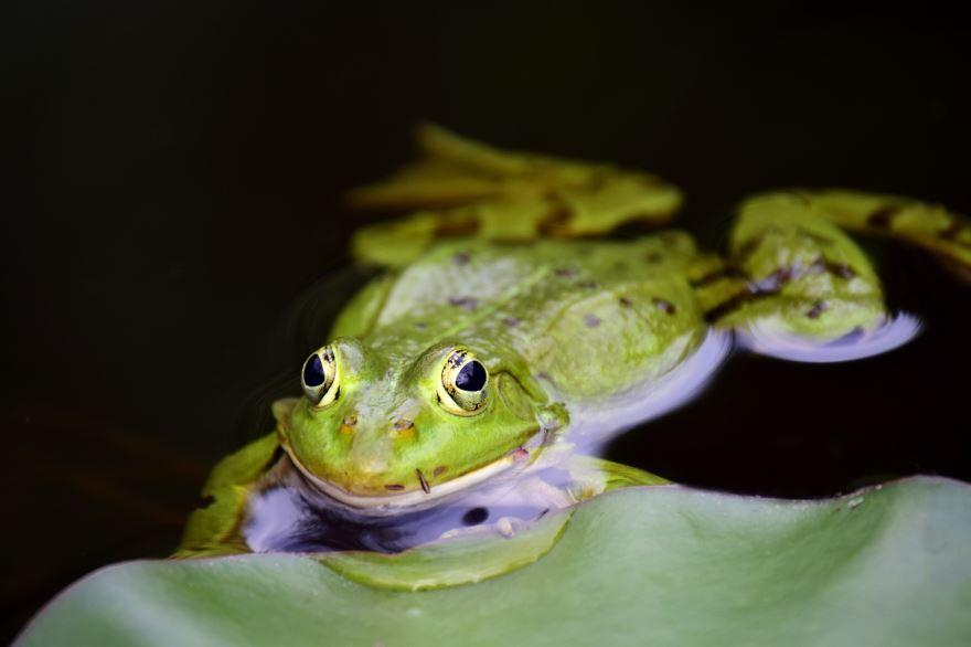Смотреть фото красивых, смешных лягушек