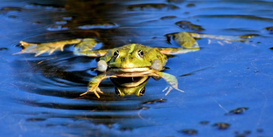 Смотреть красивые фото лягушек бесплатно
