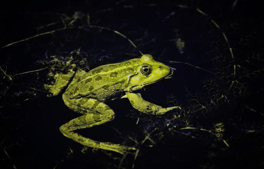 Смотреть красивые фото зеленой лягушки