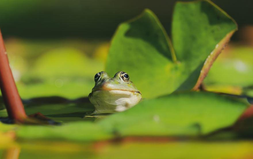 Смотреть фото прикольной лягушки