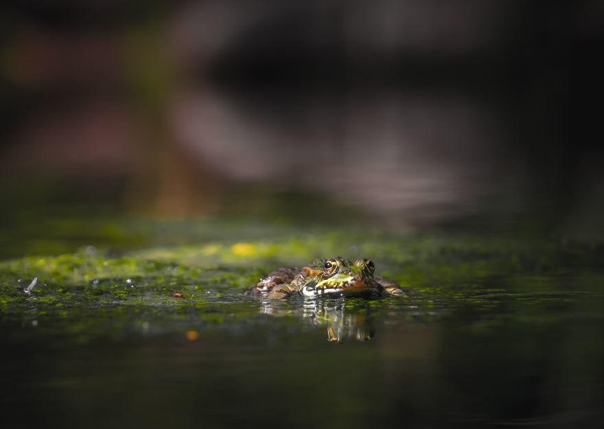 Смотреть красивые фото лягушек