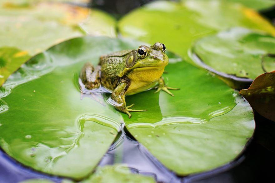 Смотреть красивые картинки лягушек