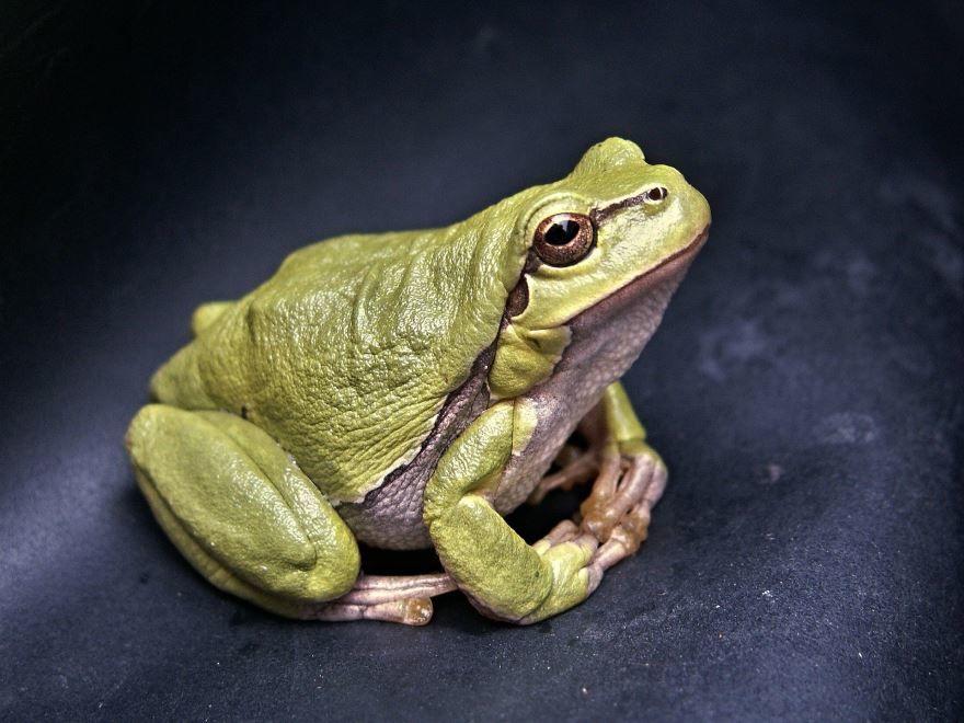 Детская картинка лягушка на природе