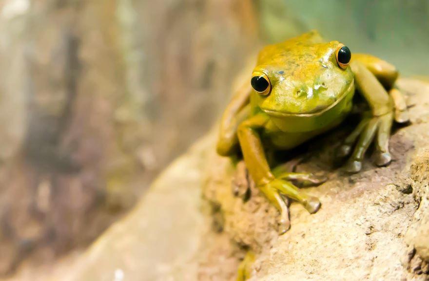 Красивая фото картинка лягушка на природе