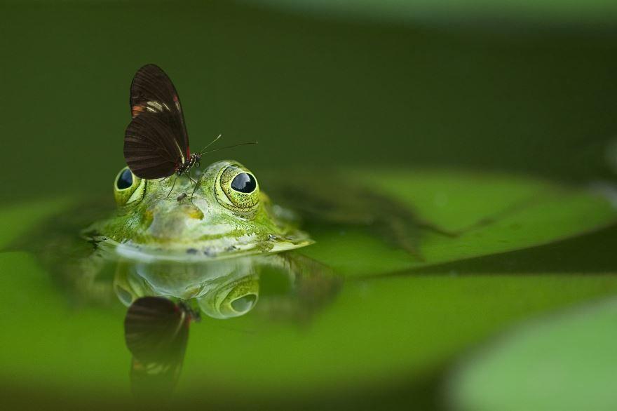 Картинки лягушка на природе