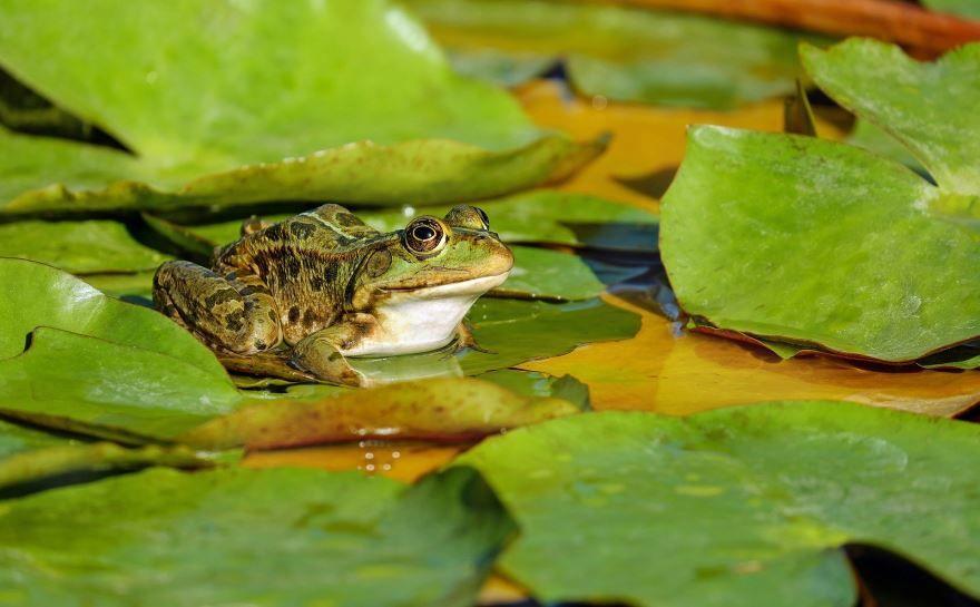 Смотреть картинки и фото лягушек