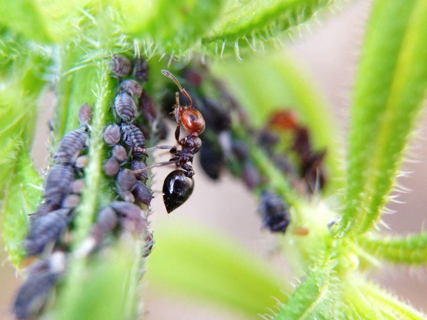Смотреть красивого муравья крупным планом