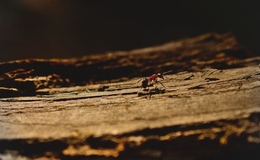 Фото красивого муравья на природе