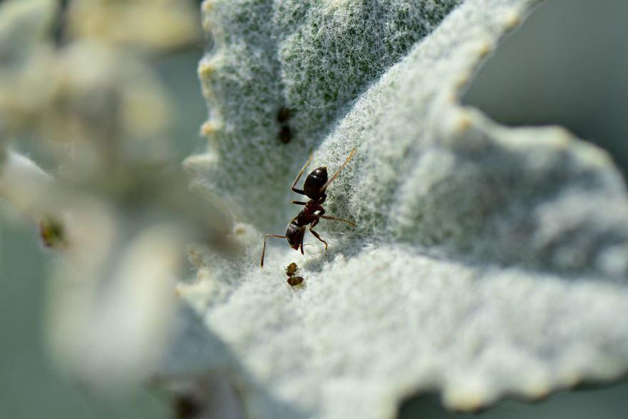 Скачать онлайн бесплатно красивые картинки муравьи