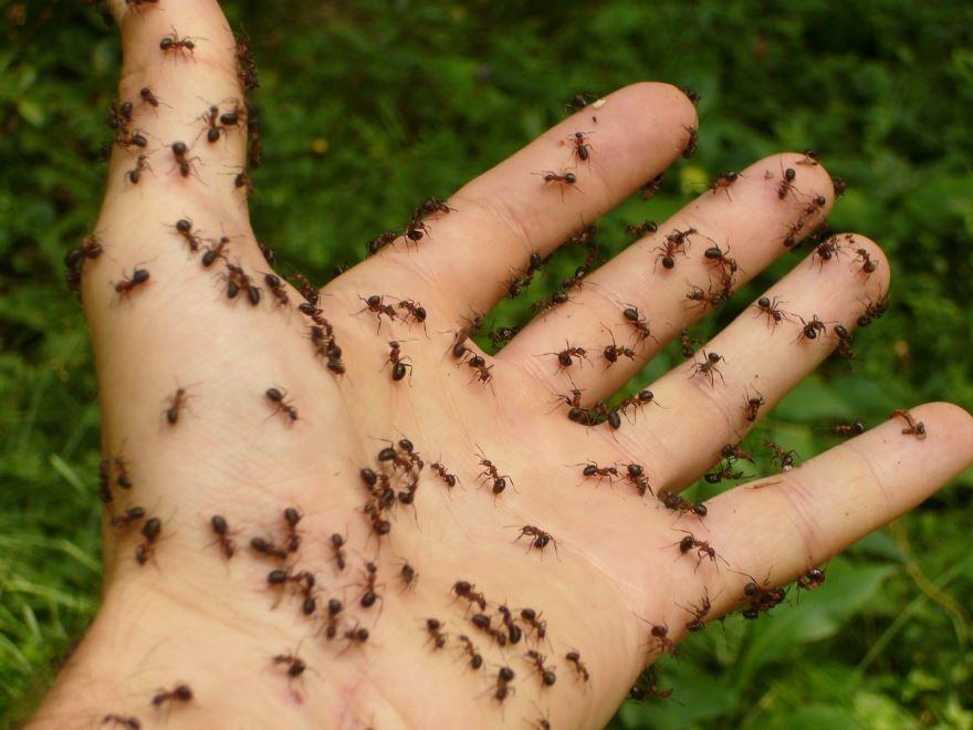 Скачать онлайн бесплатно лучшие фото муравья на природе