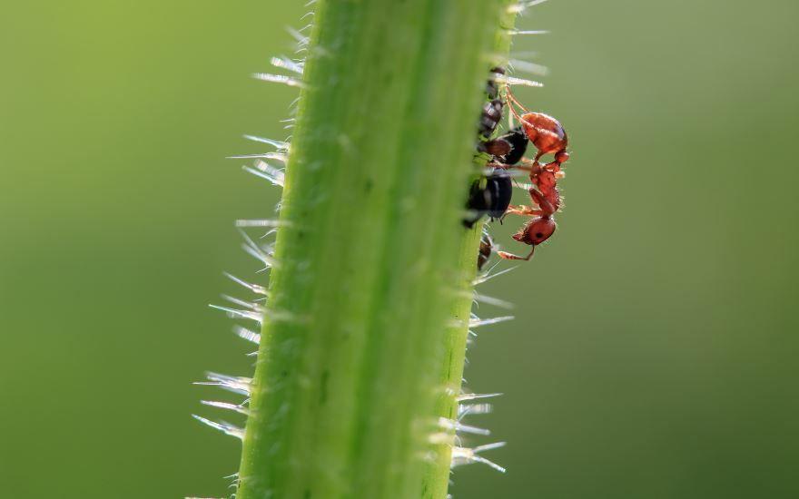 Смотреть лучшие картинки про муравья на природе