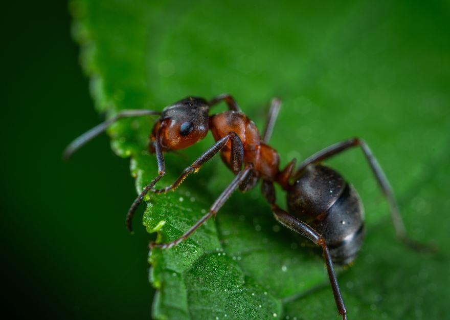 Смотреть бесплатно красивые фото муравья
