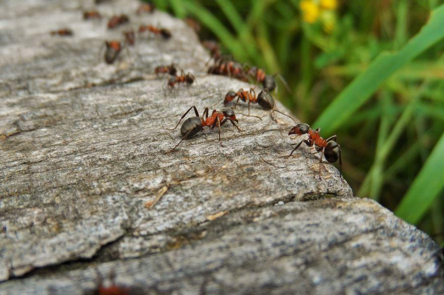 Бесплатно смотреть красивые фото муравья на природе