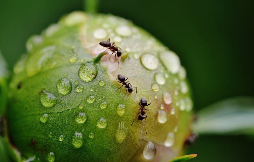 Скачать бесплатно необыкновенную картинку муравья