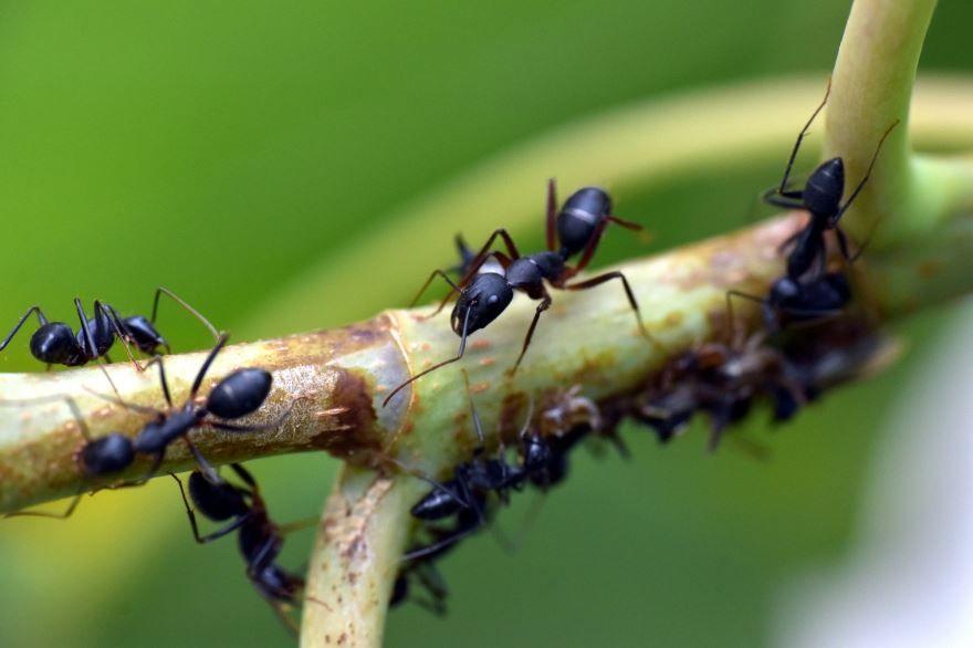 Скачать бесплатно фото лучшего черного муравья на природе