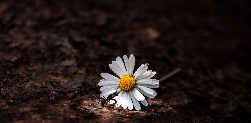 Смотреть красивые фото черного муравья бесплатно
