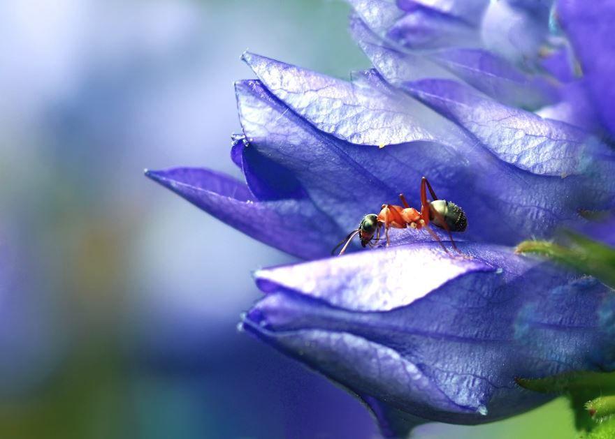 Смотреть красивые фото рыжего муравья