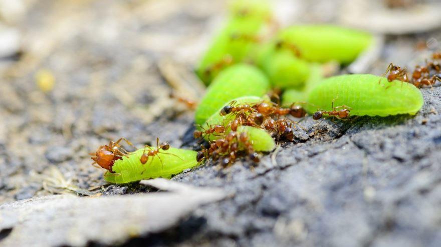 Смотреть красивые фото мир муравьев природа